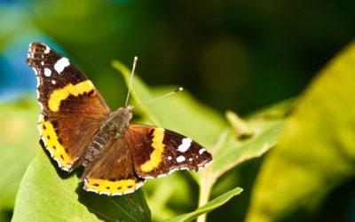 Hilfe für Schmetterlinge